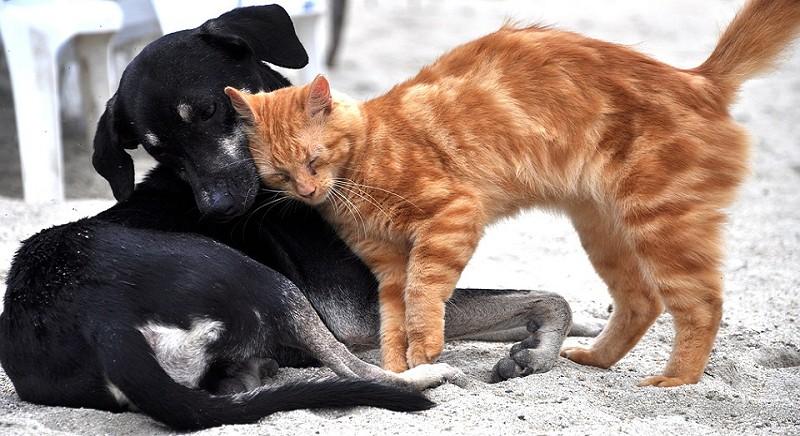 Anche il rispetto degli animali in Costituzione!