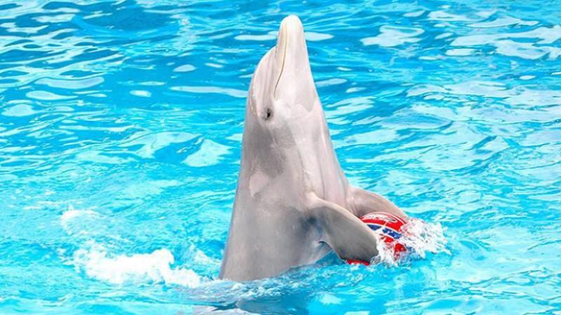 Foto di repertorio, non si riferisce al delfinario di Rimini