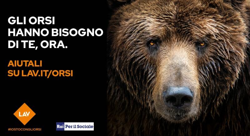 Noi stiamo con gli Orsi! Dal 13 al 21 marzo partecipa alle Giornate LAV