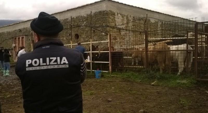 Mafia dei pascoli: al via il maxiprocesso a Messina