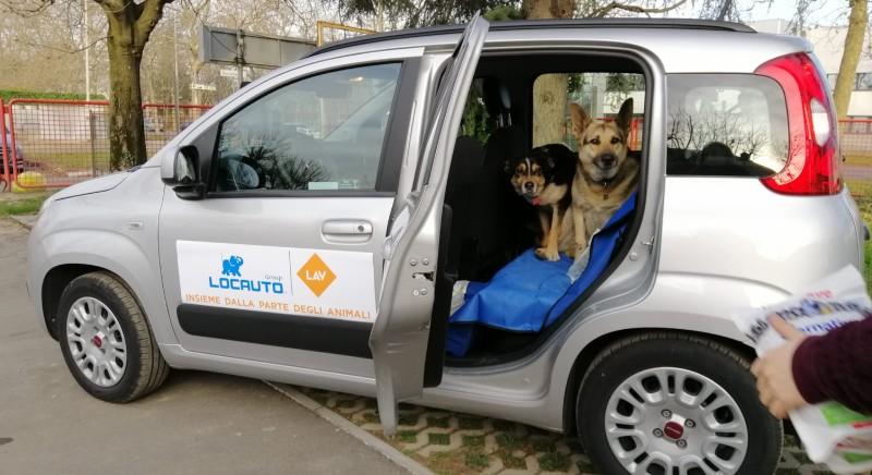 LAV e Locauto insieme per soccorso animali