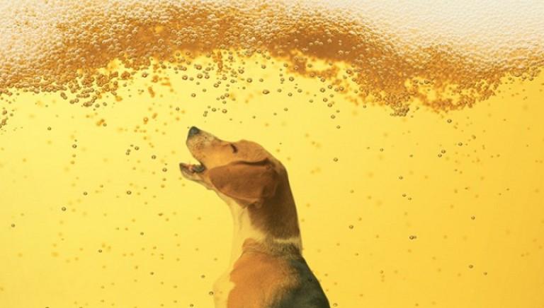 Test su animali per sostanze d'abuso e xenotropianti, rinvio di altri 6 mesi
