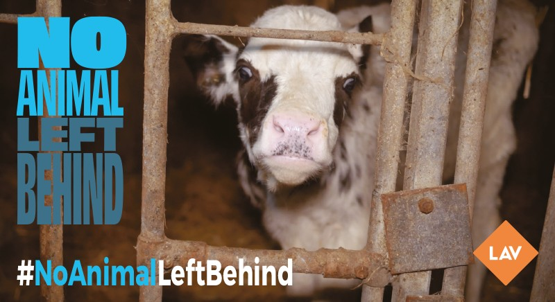 No animal left behind: nuova campagna Eurogroup for animals