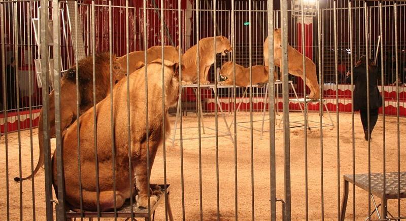 Circo: stanziati nuovi aiuti per uno spettacolo morente