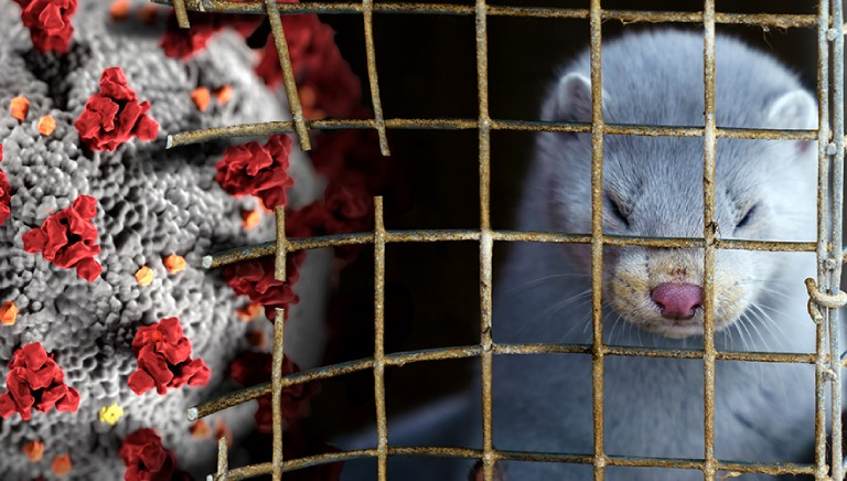 Covid-19 and mink farms: Action Day to urge the EU to act