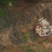 la fossa dove venivano buttati i cadaveri degli animali