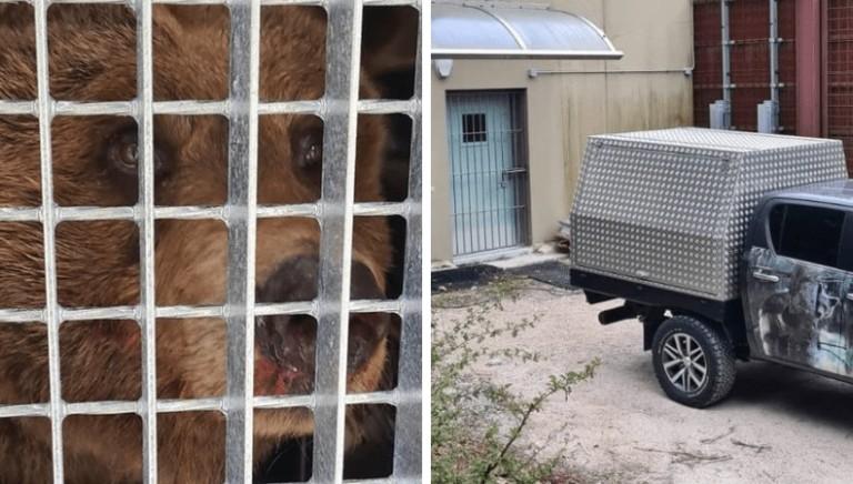 L'orsa DJ3 traferita nel nuovo carcere in Germania. No a nuove catture