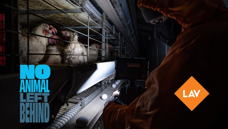 No Animal Left Behind: nessun animale dovrebbe vivere in gabbia!