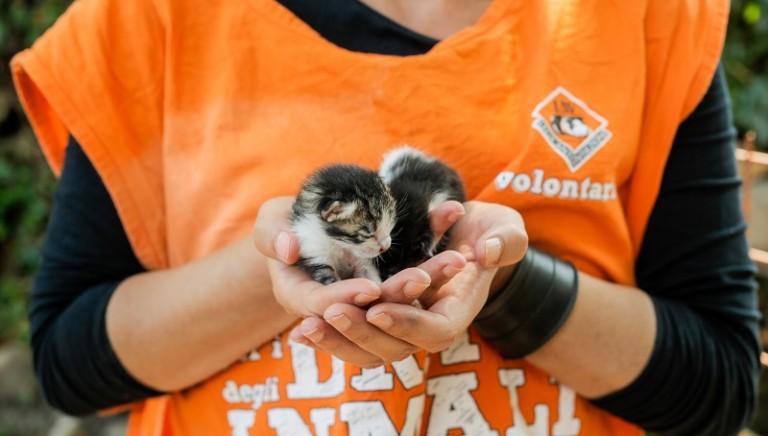 Educare  al  rispetto  degli  animali: LAV Verona nella Rete
