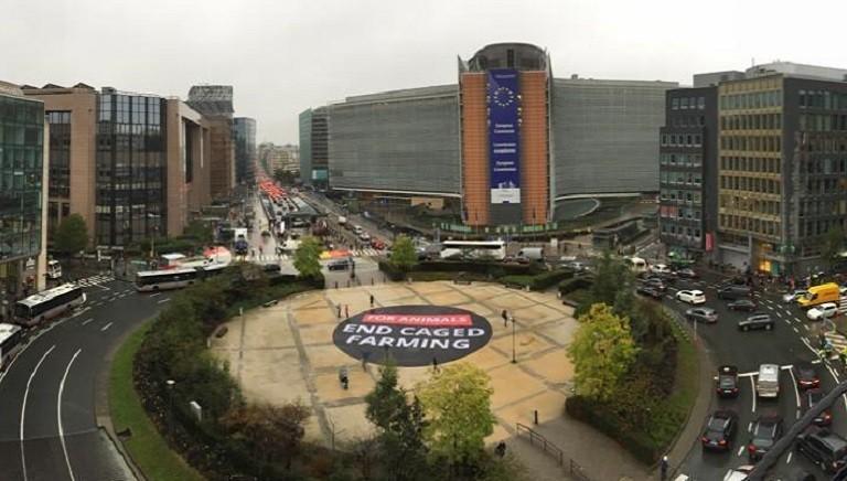 101 parlamentari UE sostengono l'ICE #ENDTHECAGEAGE