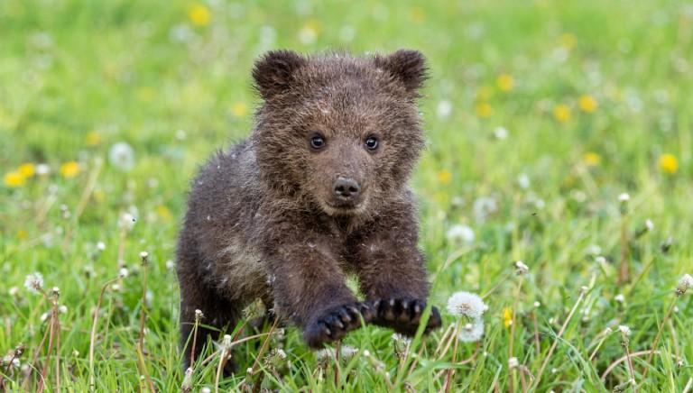 Che faccio se incontro un orso? Video tutorial LAV