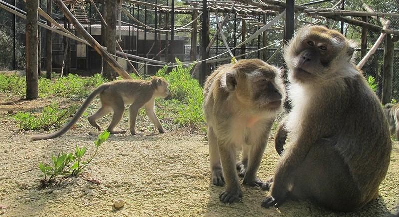 Recupero macachi: su Primates il progetto LAV-Universita' Bologna
