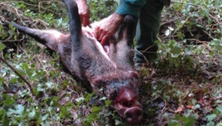 Linee-guida carne selvaggina: aspetti allarmanti per salute pubblica