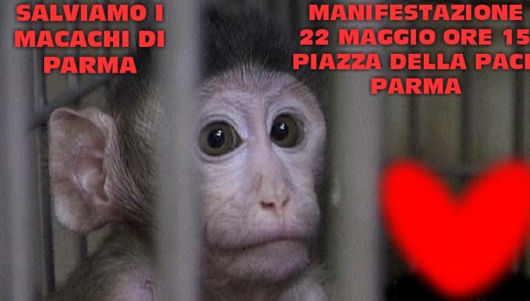 22 maggio: presidio per salvare i macachi di Parma