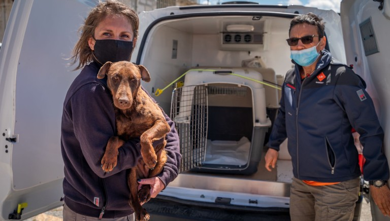 LAV international project in Kosovo for stray dogs control and rescue
