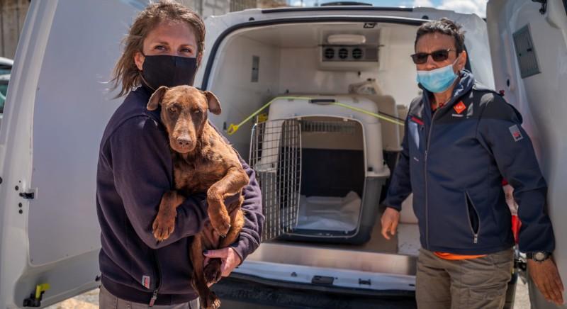 LAV in missione per i randagi del Kosovo: 5 cani sbarcano a Bari