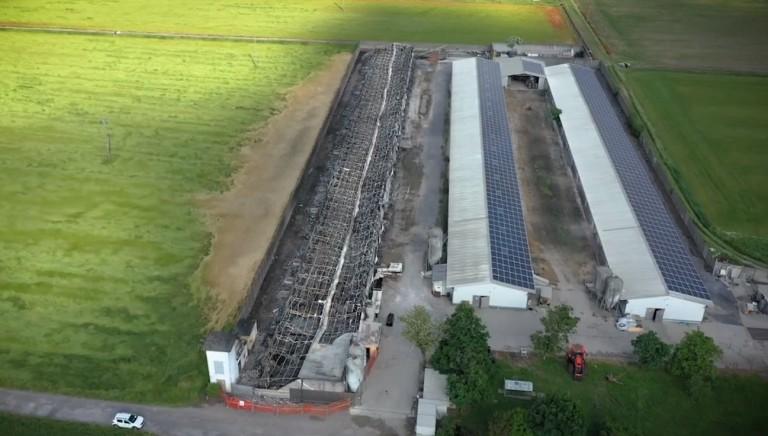 37 mila galline morte bruciate nell'incendio di un allevamento