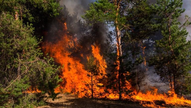 Divieto di caccia nelle aree incendiate: legge Liguria alla Corte Costituzionale