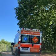 L'arrivo al Centro di recupero di Semproniano