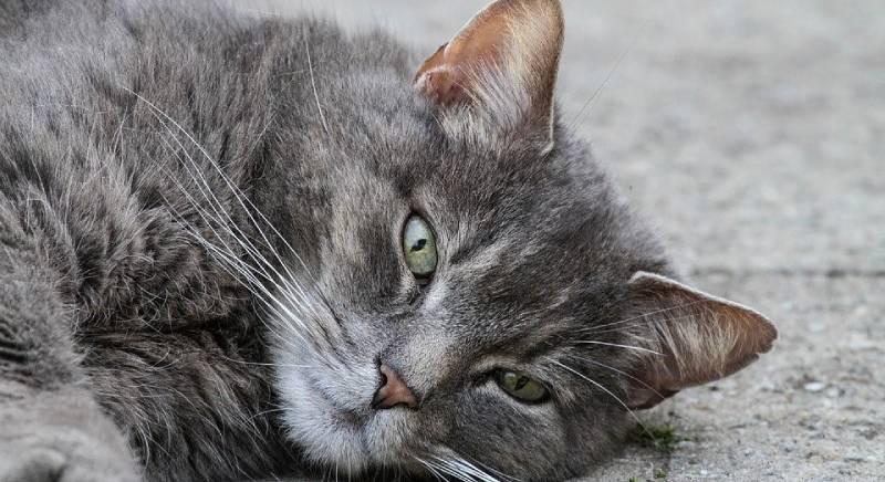 Uccide i gatti della sorella, Cassazione conferma condanna a un anno