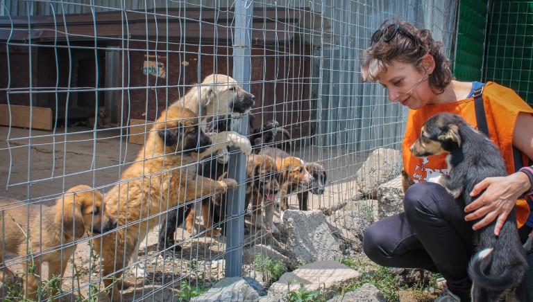Randagismo: al via formazione veterinari, prevista dal Progetto Kosovo