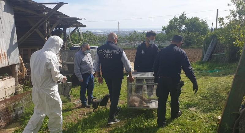 Il sequestro di un macaco giapponese detenuto illegalmente