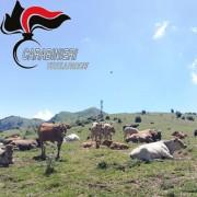 I controlli dei Carabiniere sui reati della Cupola del bestiame