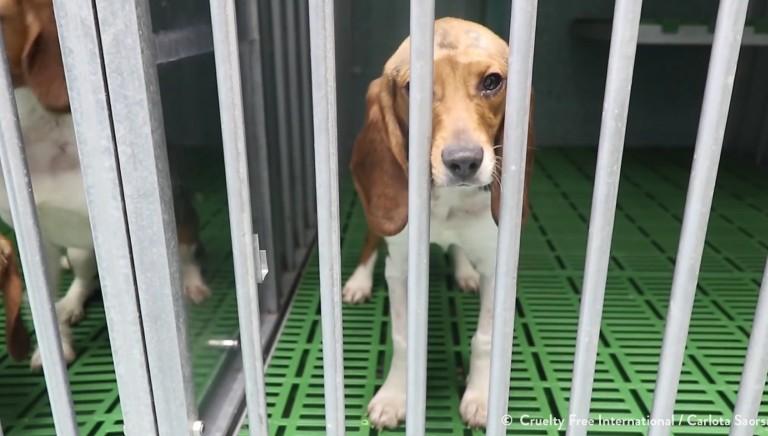 Sperimentazione animale, Commissione UE: 9 milioni di animali usati nel 2018