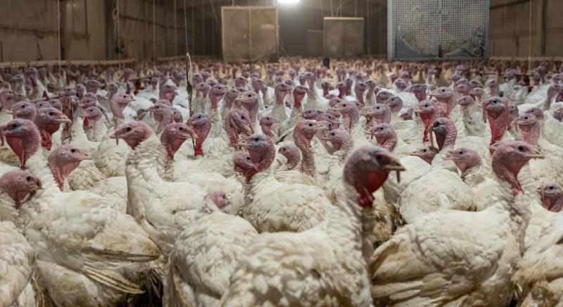 Consiglio UE Ministri Agricoltura: maggiore tutela per gli animali allevati