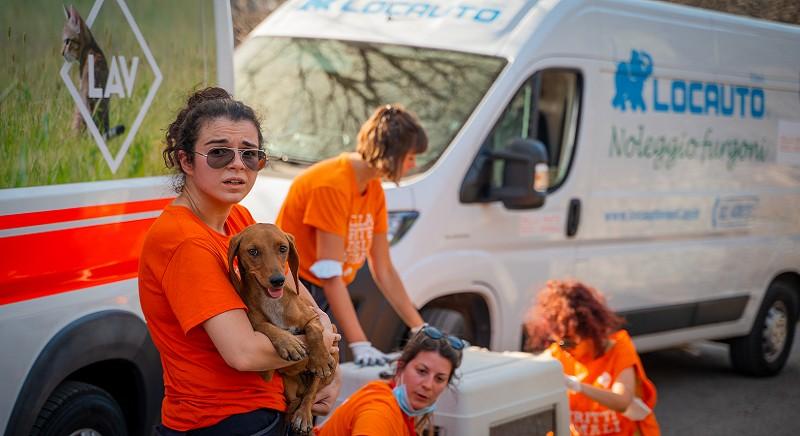 Emergenza incendi in Sardegna: LAV in aiuto con l'ambulanza veterinaria