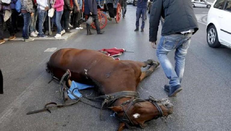 Botticelle Roma, sospesa ordinanza anti-caldo. Chiediamo stop carrozzelle!