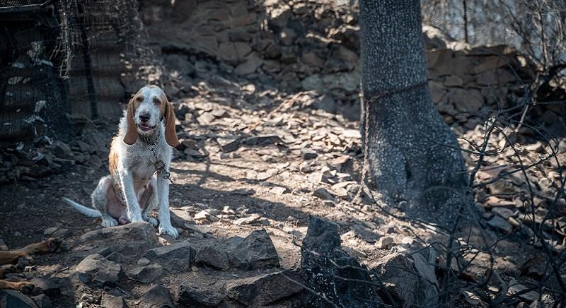 Emergenza Incendi, tanti cani morti legati alla catena: chiediamo il divieto!