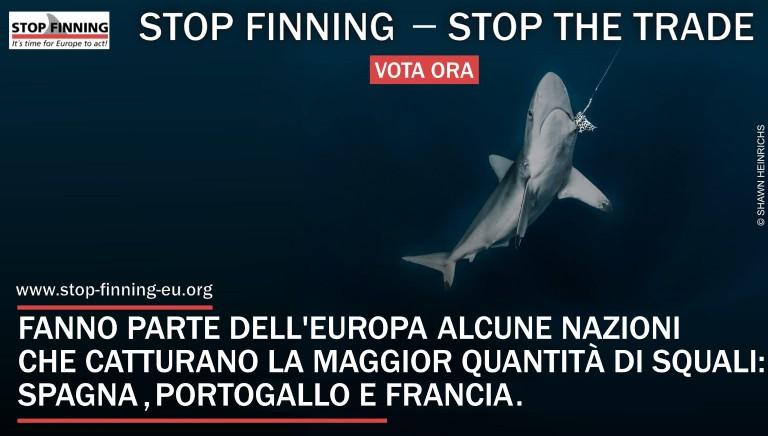 Stop finning: vota per fermare il commercio delle pinne di squalo in Europa