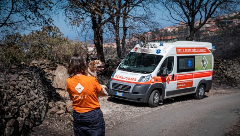 Sardegna: Unita' di Emergenza LAV rientra a Roma, ma l'impegno continua!