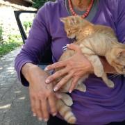 Uno dei ricongiungimenti di animali dispersi con le loro famiglie