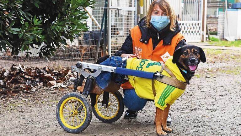 Giornata Mondiale del Cane (26 agosto): aiutiamo i cani disabili