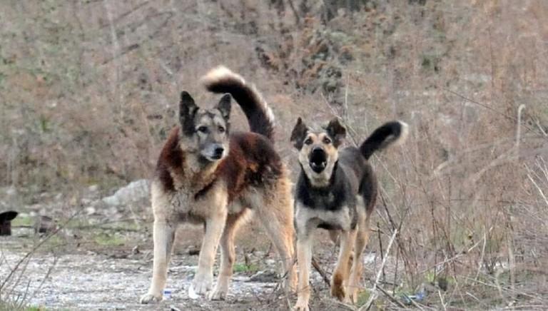 Ragazza sbranata dai cani in Calabria: urgente intervenire su randagismo
