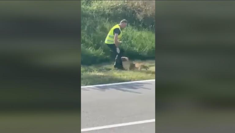 Bolzano, volpe ferita uccisa da un guardiacaccia: pronta denuncia LAV
