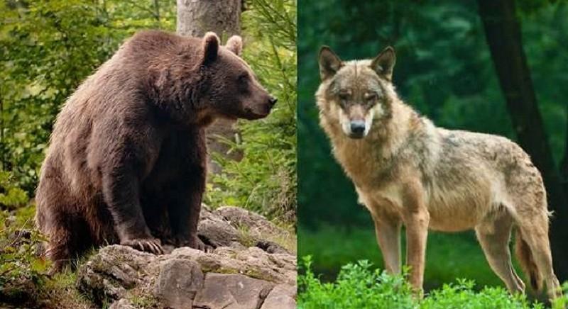 Caccia: LAV in Audizione alla Camera per bloccare progetti di legge 'caccia no limits'