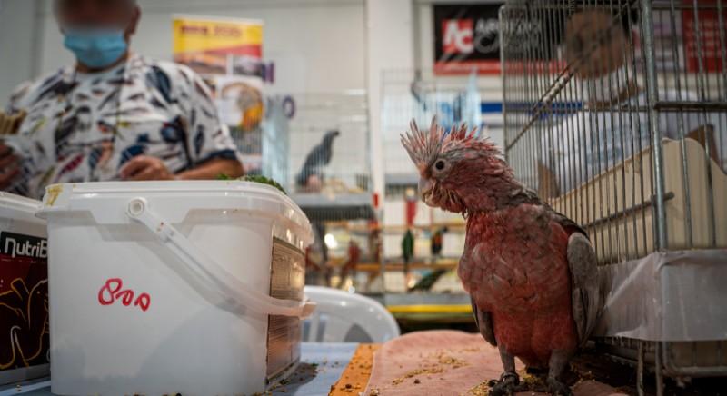 """""""Wet market"""" all'italiana: investigazione LAV in fiere animali esotici. Lasciamoli #aCasaLoro"""