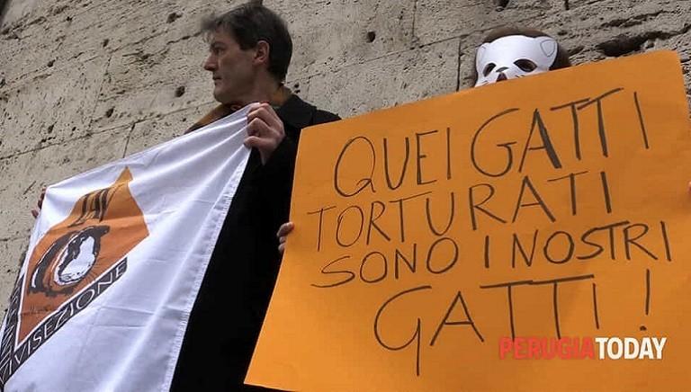 """Nuova condanna per il """"Killer dei gatti"""", di Perugia: 1 anno e 3 mesi"""