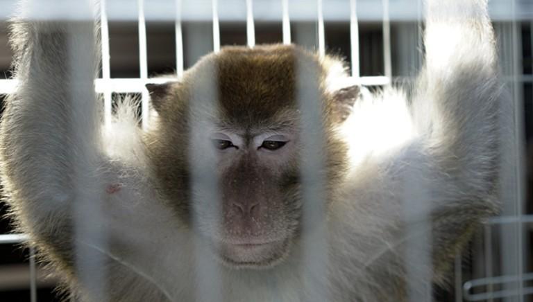 Sperimentazione animale: Decreto formazione personale laboratorio. Silenzio su dismissione animali