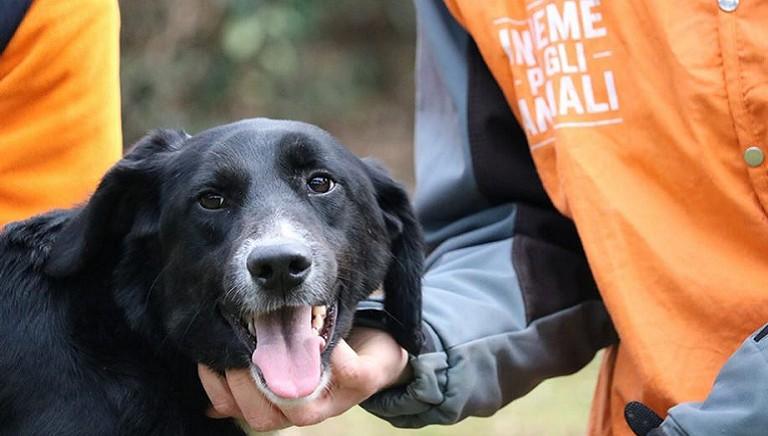 Sicilia: al via il tour LAV 'Identificato e protetto' per la microchippatura gratuita dei cani