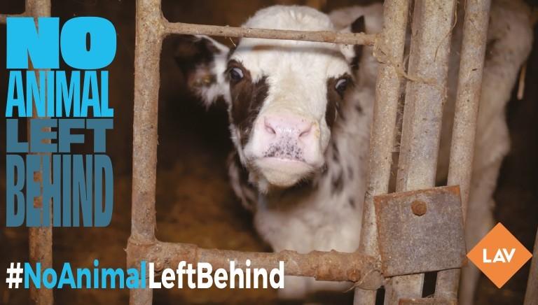 #NoAnimalLeftBehind: investigazioni allevamenti UE mostrano urgenza revisione norme tutela animali