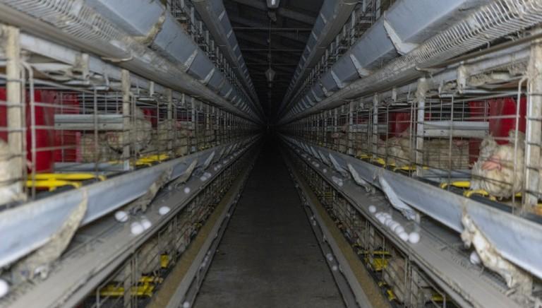 Agrifish UE: chiediamo una normativa ambiziosa a tutela degli animali allevati