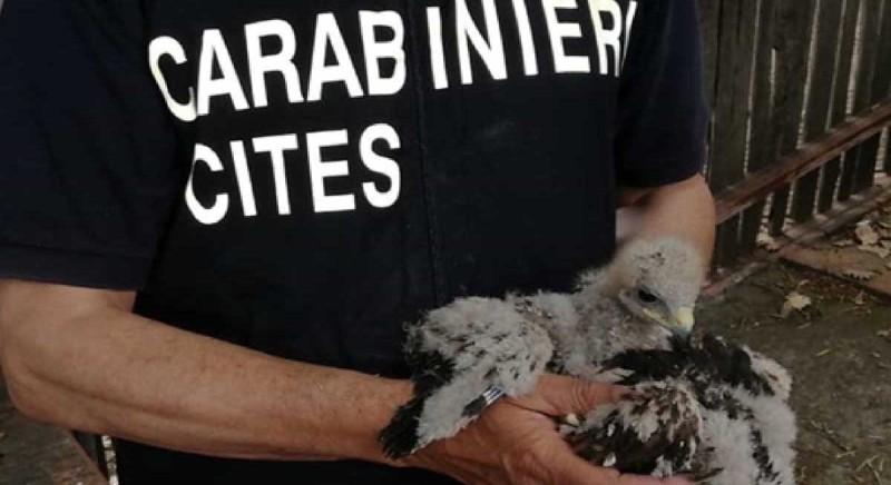 Contrasto dei reati a danno di animali: ciclo di webinar Arma dei Carabinieri-LAV