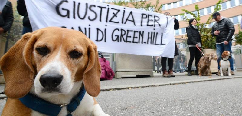 I beagle di Green Hill davanti il Tribunale di Brescia nei giorni del Processo