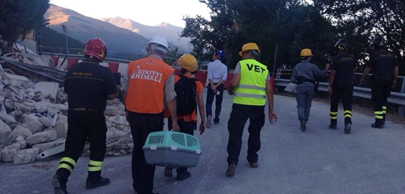 Emergenza Terremoto: la task force LAV impegnata nelle zone terremotate!