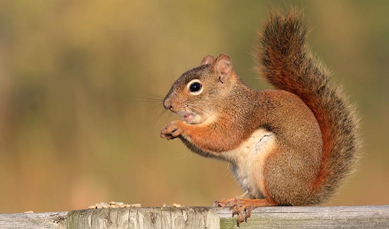 Io sto con gli scoiattoli