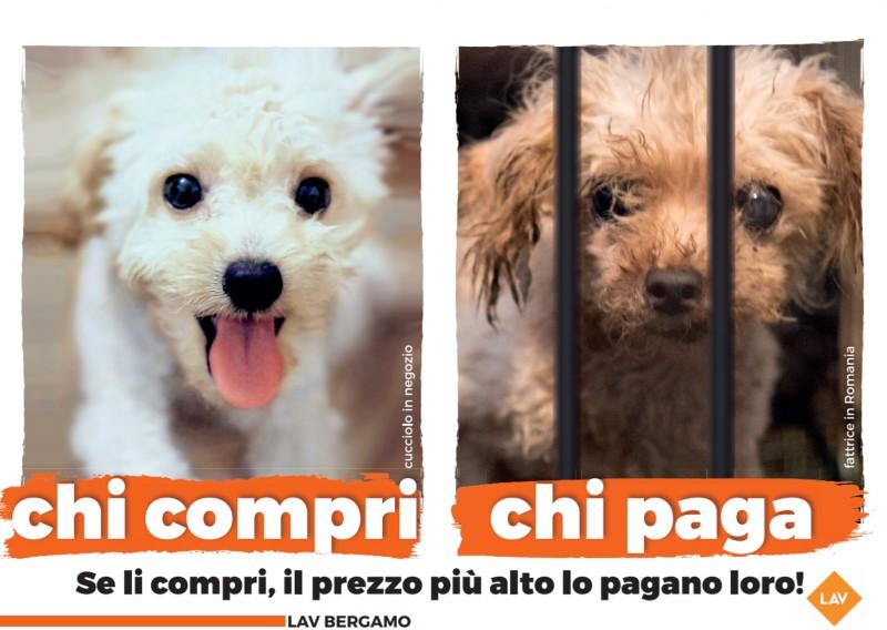 Commercio di animali